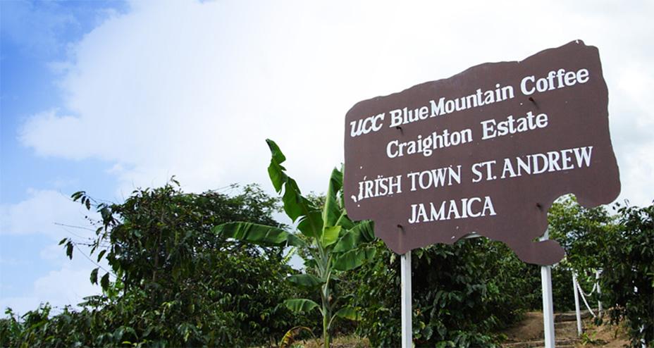 UCCカフェメルカード:UCC直営農園 ジャマイカ ブルーマウンテン No.1 クレイトン・エステート