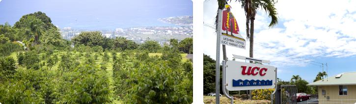 UCCカフェメルカード:UCC直営農園 アメリカ合衆国 ハワイ島 コナ地区 UCCハワイコナコーヒー・エステート