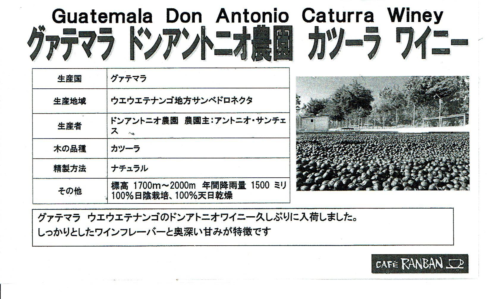 カフェ ランバン:グアテマラ ドン・アントニオ農園 カツーラ ワイニー