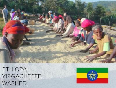 丸美珈琲店:エチオピア イルガチェフェ コンガ農協 G-1 ウォッシュト