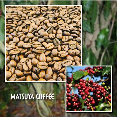 松屋コーヒー本店:ブラジル セルトン農園 百年樹 レッドブルボン