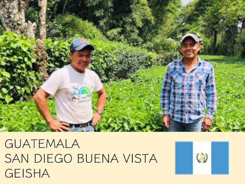 丸美珈琲店:グアテマラ サンディエゴ ブエナビスタ農園 ゲイシャ
