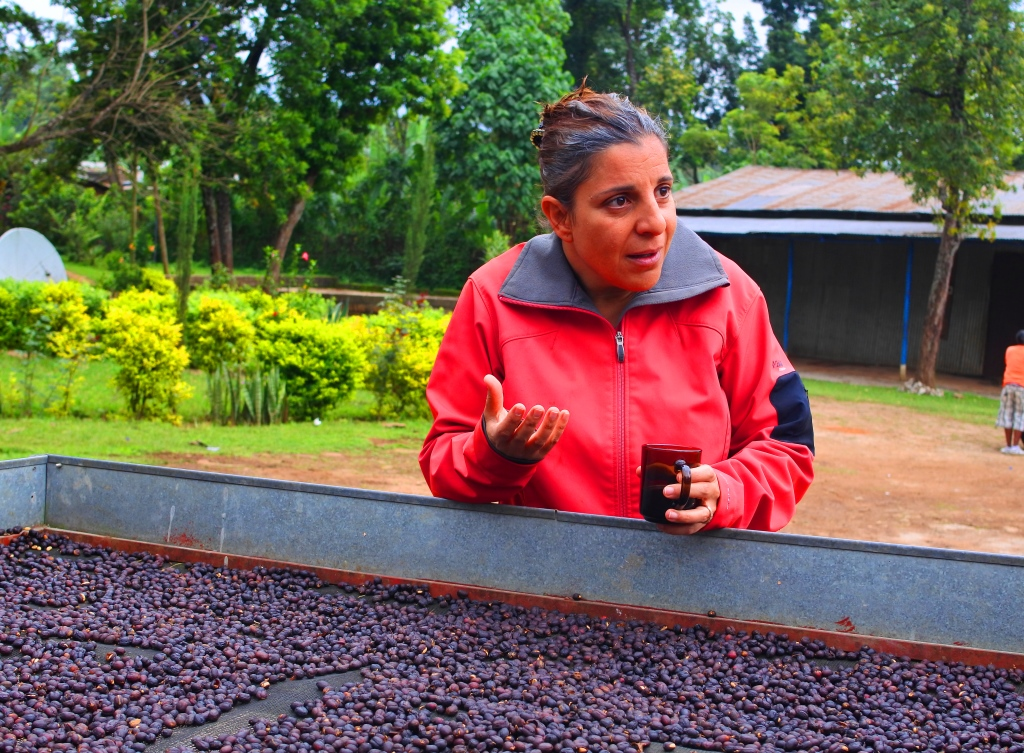 豆ポレポレ:エチオピア グジ ブルーナイル ウォッシュト