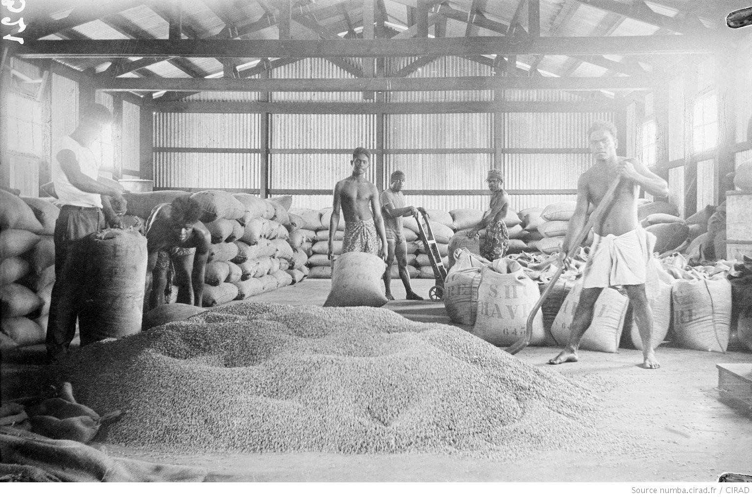 ニューカレドニアのコーヒーの歴史(6):ポール・ジョバンとアーヴル・カレドニア組合(SHC)
