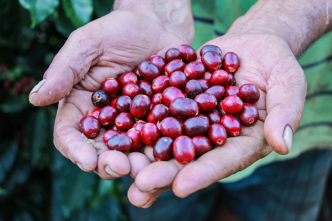 丸美珈琲店:グアテマラ グアタロン農園 フレンチロースト