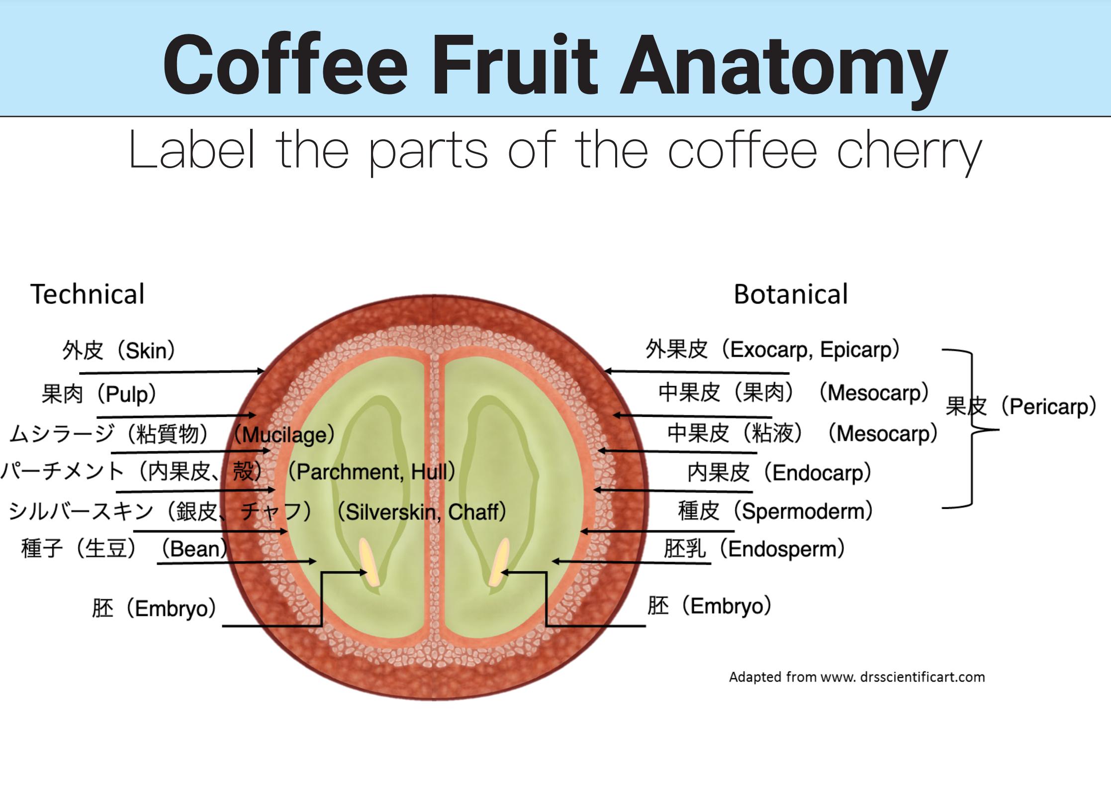ロースト デザイン コーヒー:ルワンダ シンビ アナエロビック ナチュラル